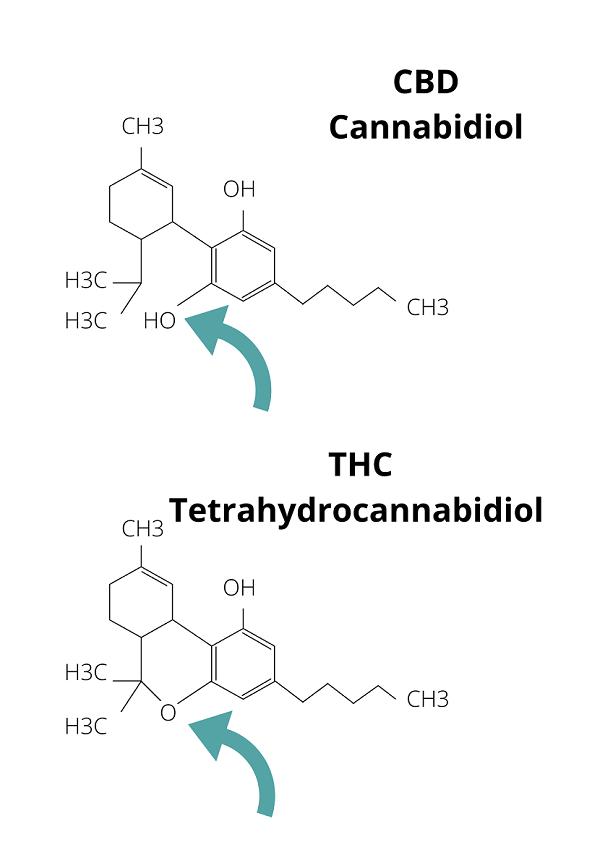 Zusammensatzung THC CBD