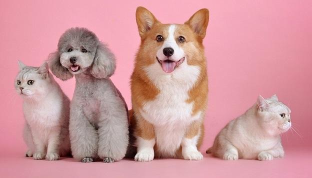 Online Tierapotheke Haustiere