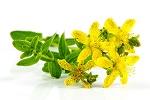 naturheilkunde johanniskraut heilpflanze